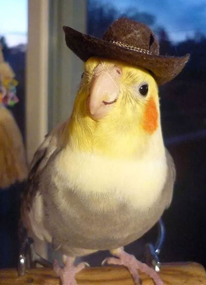 Bird With A Hat